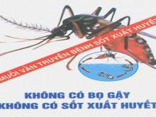 Hải Phòng: Chủ động kiểm soát dịch bệnh sốt xuất huyết bùng phát