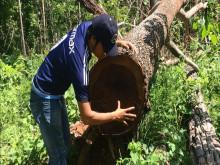 Tiếng kêu cứu từ rừng Tây Nguyên - Bài 1: Thực trạng đáng buồn