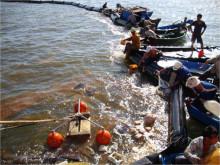 Quảng Ninh: Bục đường ống dẫn, 200 lít dầu tràn ra Vịnh Hạ Long