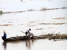 Phú Thọ: Coi thường tính mạng, người dân đua nhau vớt củi trên sông khi nước dâng cao