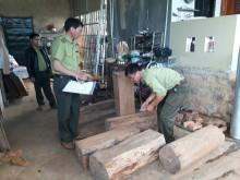 Tiếng kiêu cứu từ rừng Tây Nguyên - Bài 2: Trung ương quyết liệt, địa phương chưa vào cuộc?