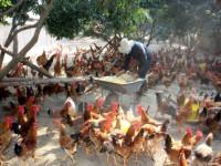 Khuyến khích thành lập doanh nghiệp ở xã Quảng Hải, Quảng Xương - Thanh Hóa