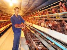 Liên kết chuỗi trong chăn nuôi: Xu thế tất yếu