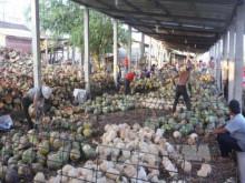 Người biến trái dừa Việt Nam thành