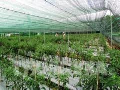 Thủ tướng yêu cầu tháo gỡ vướng mắc trong sản xuất nông nghiệp công nghệ cao