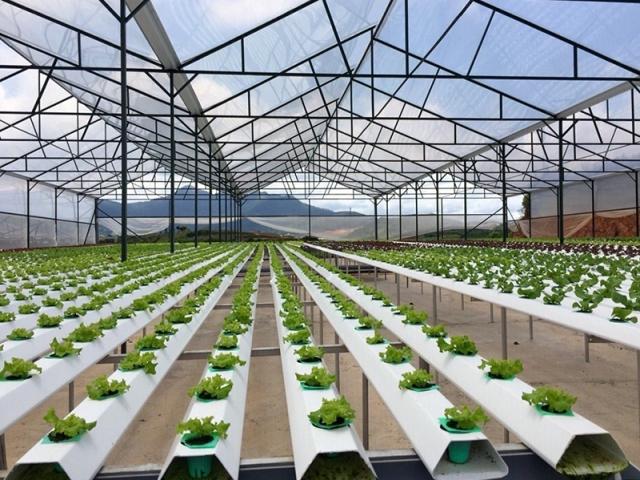 Tập trung đào tạo nhân lực nông nghiệp công nghệ cao