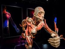 Bộ Văn hóa yêu cầu báo cáo về triển lãm cơ thể người đang gây tranh cãi