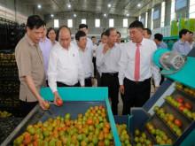 """Nhiều rào cản """"ngáng chân"""" doanh nghiệp đầu tư vào nông nghiệp"""