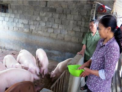 Giá lợn hơi tăng mạnh, người nuôi vẫn phải dè chừng