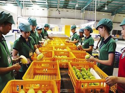 Thưng mại Hàn Quốc sẽ áp dụng hệ thống quản lý dư lượng thuốc bảo vệ thực vật mặt hàng nông sản