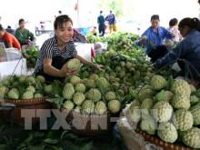 Nông sản Việt xuất khẩu sang Trung Quốc còn nhiều bấp bênh