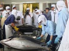 Thị trường xuất khẩu cá ngừ chuyển dịch sang Châu Á và Trung Đông