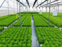 Hướng dẫn triển khai chính sách khuyến khích doanh nghiệp đầu tư vào nông nghiệp, nông thôn
