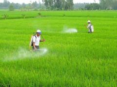 Cấp bách việc quản lý sản xuất kinh doanh và sử dụng thuốc trừ cỏ