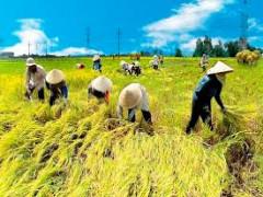 Đẩy mạnh phát triển kinh tế hợp tác, hợp tác xã