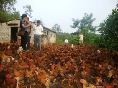 Tập đoàn Gold Coin: Trao đồng tiền vàng cho người chăn nuôi Việt