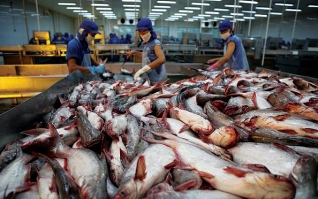 Xuất khẩu cá tra sang thị trường Trung Quốc cần hướng đến chính ngạch