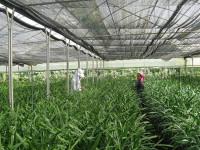 Bài toán tăng giá trị nông sản: Công nghệ là lời giải