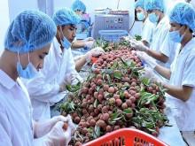 Hé lộ điểm ngáng trở nông sản Việt thâm nhập thị trường thế giới
