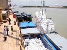Cơ hội nâng tầm gạo Việt