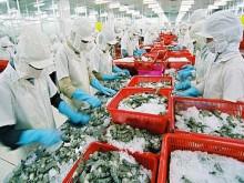 Xuất khẩu tôm sang Mỹ sẽ phục hồi trong những tháng cuối năm
