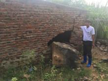 Thị xã Bỉm Sơn, tỉnh Thanh Hóa: Nỗi khổ của người dân sống xung quanh Công ty Xi măng Long Sơn