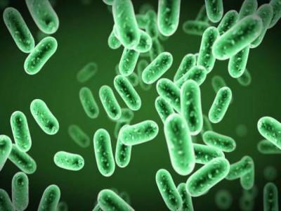 Báo động người nhiễm khuẩn từ thú cảnh