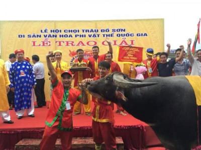 Lễ hội chọi Trâu Đồ Sơn 2018 hấp dẫn ấn tượng