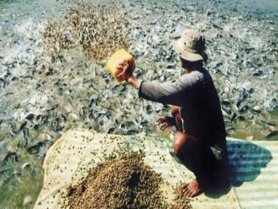 Phạt nặng hành vi sử dụng chất cấm trong chăn nuôi