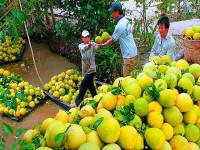 Đẩy mạnh xúc tiến thương mại trong lĩnh vực trồng trọt và chế biến hoa, rau, quả