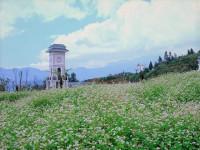 Đến ngay Sun World Fansipan Legend khám phá đồi hoa tam giác mạch rộng 8000m2