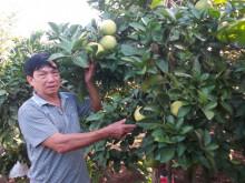 Nâng cao thu nhập từ phát triển kinh tế vườn hộ