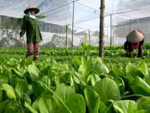 Hà Nội: Sẽ xây dựng 5-10 mô hình sản xuất nông nghiệp hữu cơ