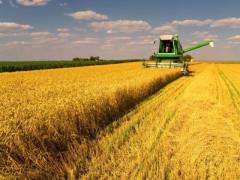 Nhiều doanh nghiệp phải đóng cửa nếu cấm nhập khẩu lúa mì từ thị trường Nga, Canada...