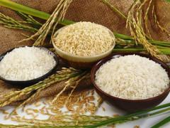 Một loạt quy định mới 'cởi trói' cho xuất khẩu gạo Việt