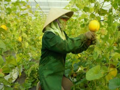 Mở cửa đón nhà đầu tư vào nông nghiệp 4.0
