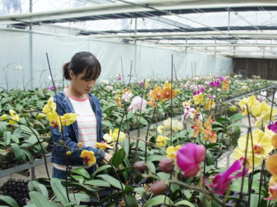 'Nút thắt' nào cần gỡ để hút đầu tư vào nông nghiệp?