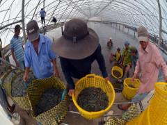 Năm năm tái cơ cấu nông nghiệp: 3 trục sản phẩm mang về 40 tỷ USD