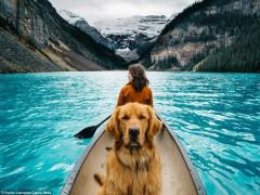 Những điều nhất định phải biết khi du lịch với thú cưng