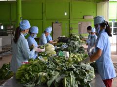 Hà Nội chủ động nguồn cung nông sản Tết