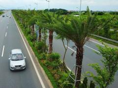 Hà Nội chi 443 tỉ đồng cho trồng, tỉa cây xanh