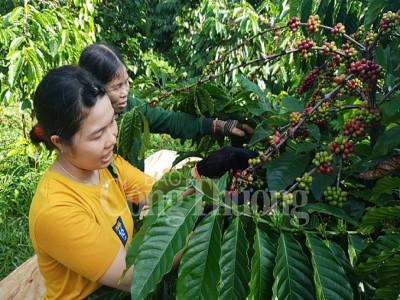 Phát triển bền vững ngành cà phê Việt Nam