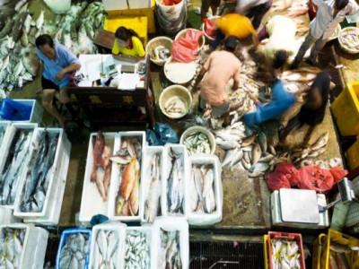 Singapore lên kế hoạch triển khai thương mại điện tử B2B hải sản đầu tiên vào năm sau