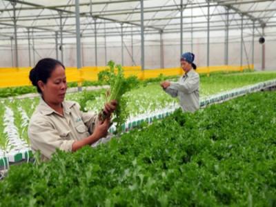 Chính phủ đẩy mạnh xây dựng nền nông nghiệp thông minh