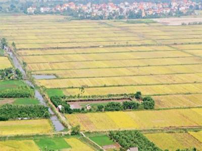 Thủ tục hành chính về đất đai tiếp tục làm khó doanh nghiệp