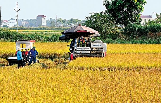 Tăng trưởng trong nông nghiệp:Nhanh nhưng chưa chắc