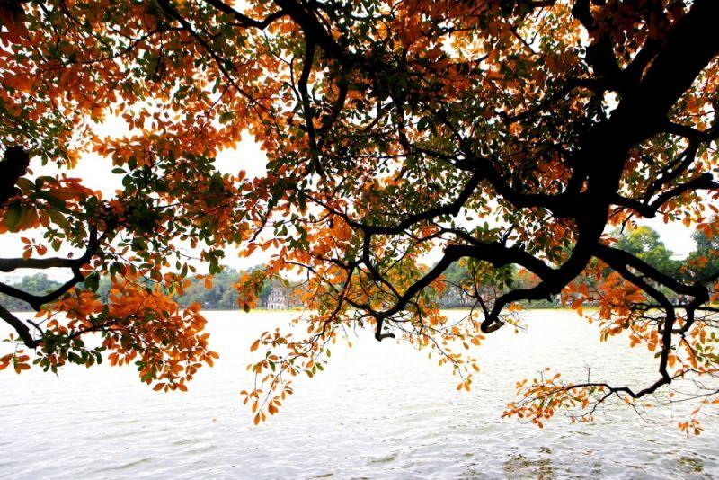 Hồ Gươm thơ mộng mùa cây thay màu lá