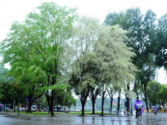 Dự báo thời tiết 15/4: Miền Bắc có nơi mưa rất to