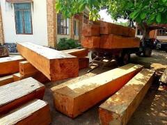 Rừng của Công ty Lâm nghiệp huyện Ea kar liên tiếp bị chặt phá: Ai chịu trách nhiệm?
