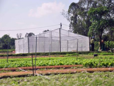Đầu tư vào nông nghiệp công nghệ cao - Bài 2: Để chính sách trở thành bà đỡ